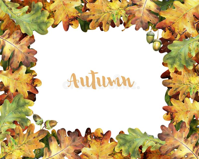 Kader met bladeren van eik met kleurpotloden worden geschilderd dat royalty-vrije stock afbeeldingen