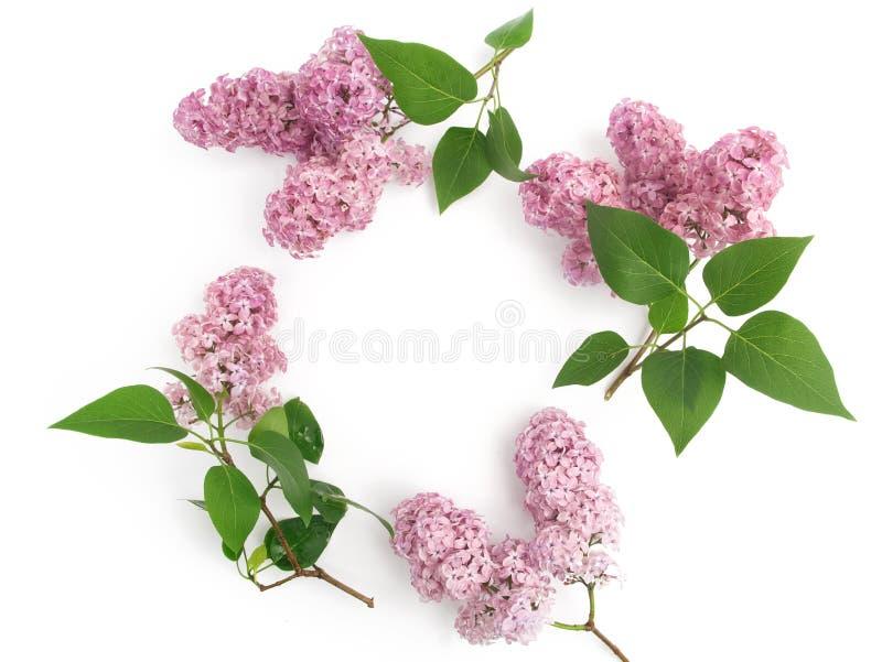 Kader met lilac bloemen en bladeren op witte achtergrond vlak leg, luchtmening royalty-vrije stock afbeeldingen