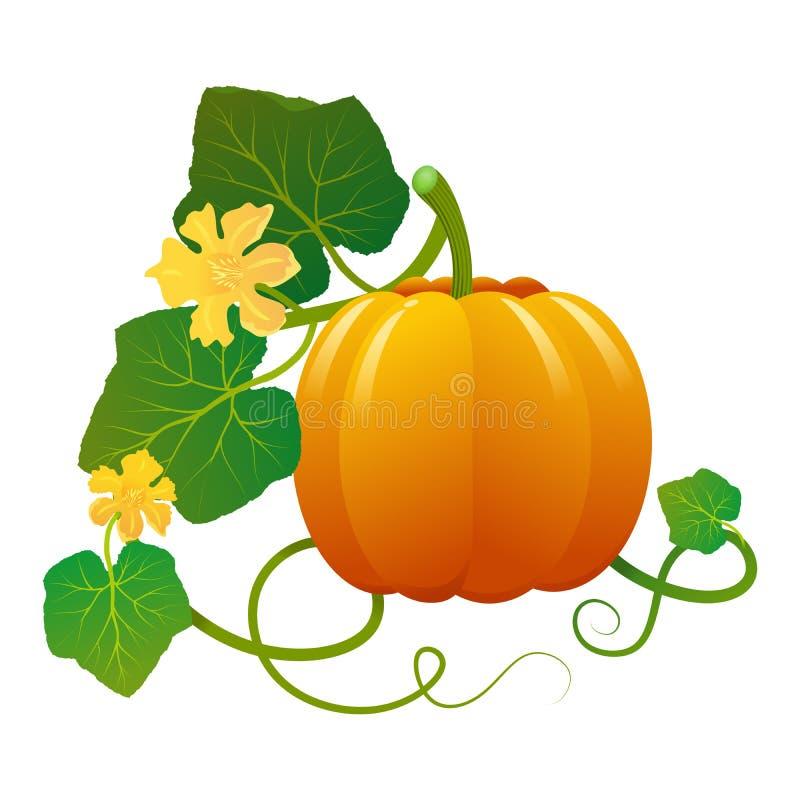 Kader met pompoen en zijn bladeren Illustratie Ideaal om kwesties over dit groente en voedsel of zelfs over traditie te illustrer stock illustratie