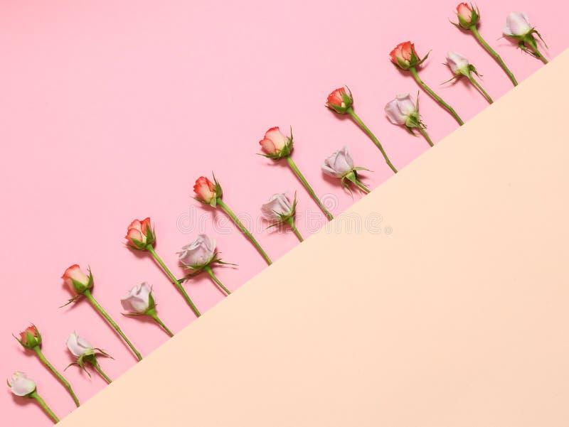 Kader met rozen Roze witte rozen Achtergrond van vakantie de roze backgroundFlowers Vlak leg met roze en rode rozen Kader met roz royalty-vrije stock foto's