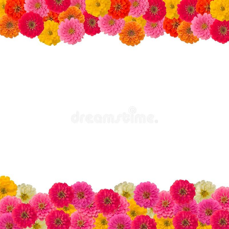 Kader van bloem Zinnias royalty-vrije stock foto's