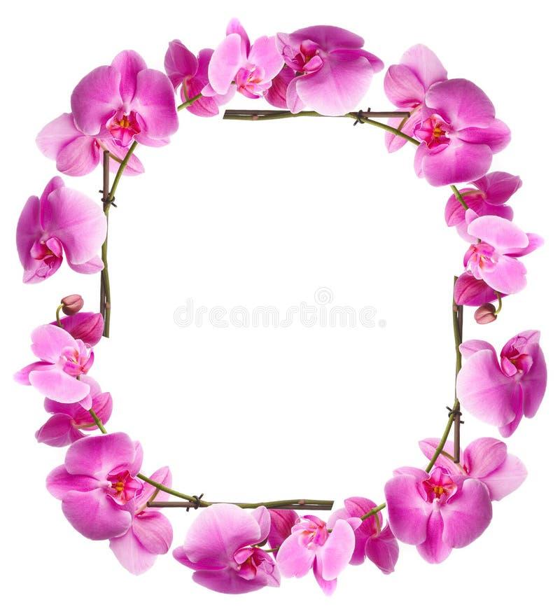 Kader van bloemenorchideeën royalty-vrije stock fotografie