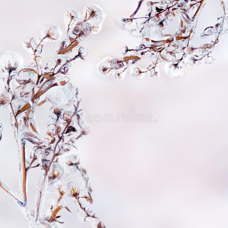 Kader van bloemtakken bedekt met een laag ijs op een zachte, natuurlijke achtergrond langs de contour stock foto