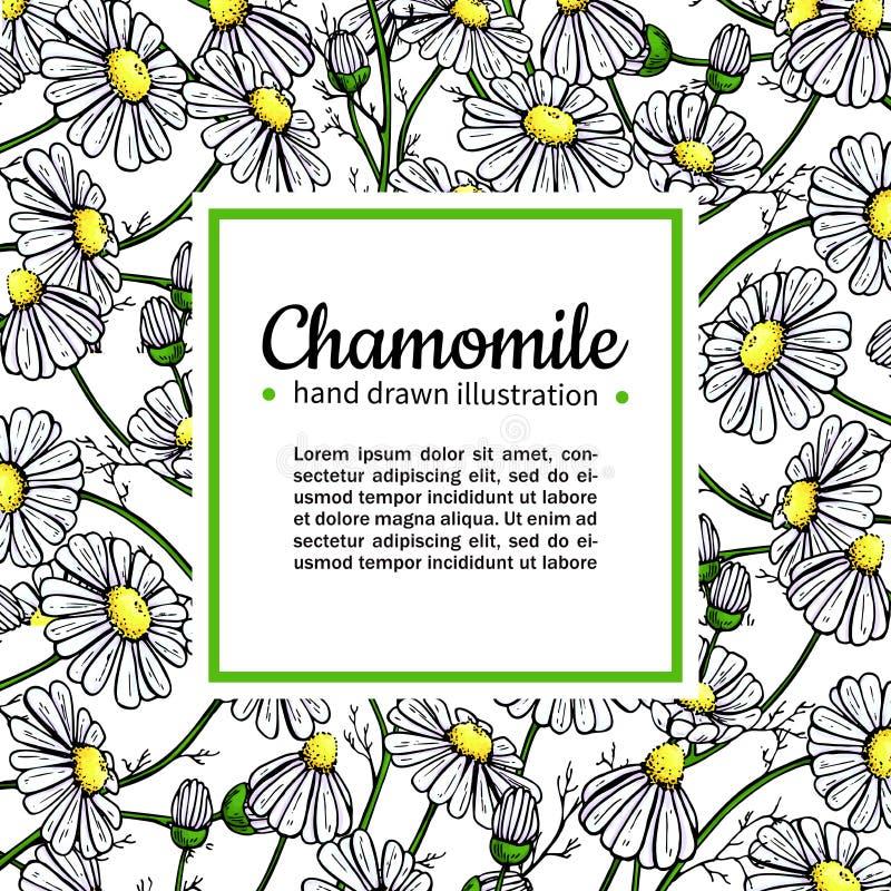 Kader van de kamille het vectortekening Geïsoleerde madeliefje wilde bloem en bladeren Kruiden artistieke stijlillustratie stock illustratie