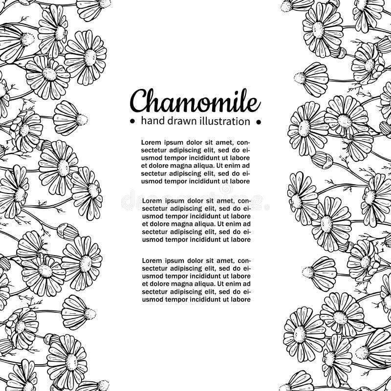 Kader van de kamille het vectortekening Geïsoleerde madeliefje wilde bloem en bladeren Kruiden gegraveerde stijlillustratie royalty-vrije illustratie
