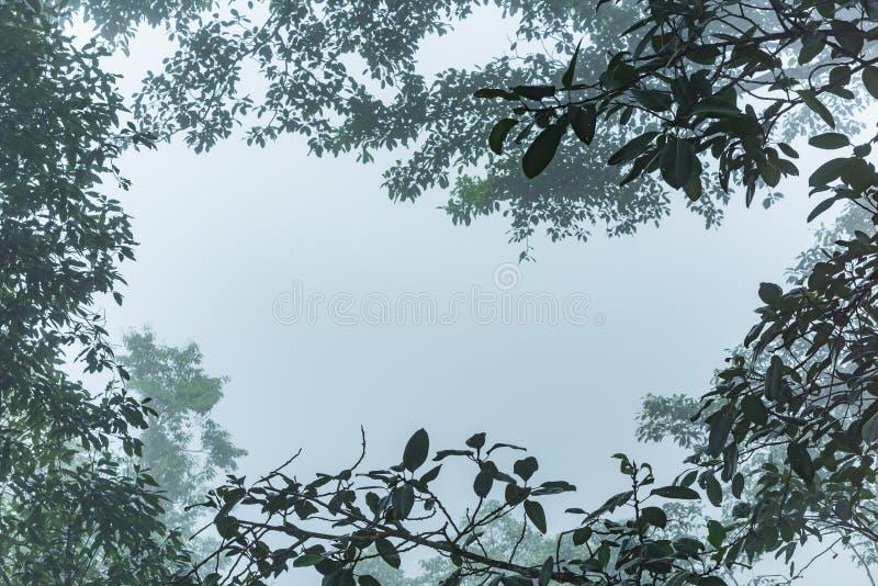 Kader van de tak in de ochtend met dichte mist royalty-vrije stock afbeeldingen