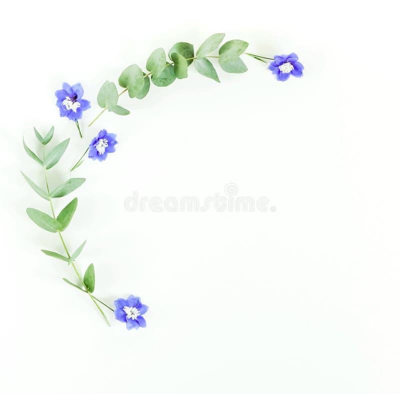 Kader van eucalyptustakken en blauwe bloemen op witte achtergrond wordt gemaakt die stock foto's