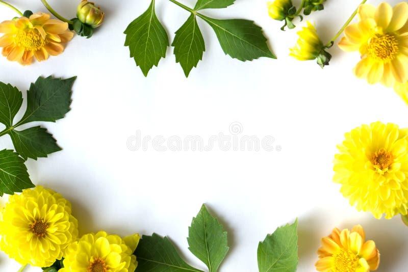 Kader van gele bloemen en groene bladerendahlia stock fotografie