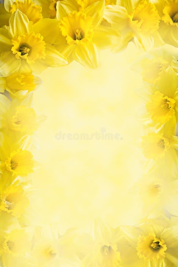 Kader van gele narcissen, gele bloemachtergrond met exemplaarruimte royalty-vrije stock fotografie