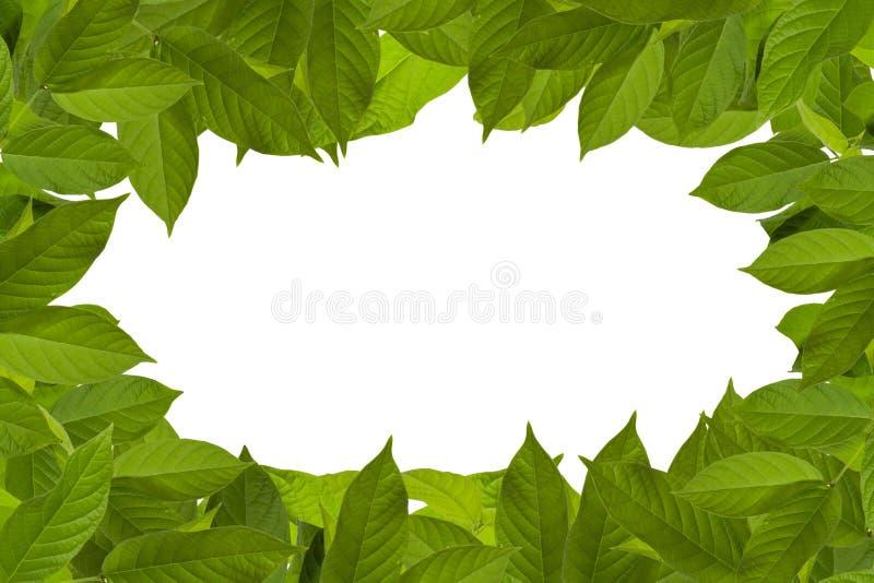 Kader van groene bladeren royalty-vrije stock foto