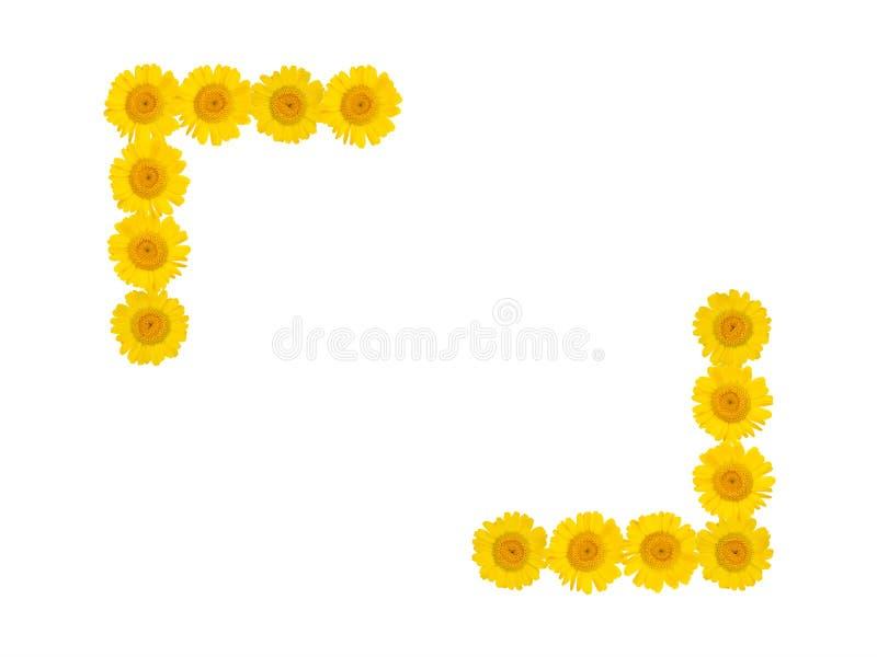 Kader van heldere gele chrysantenbloemen op een wit geïsoleerde achtergrond De stemming van de zomer Vrije ruimte royalty-vrije illustratie