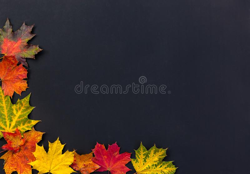 Kader van kleurrijke de herfstbladeren met ruimte voor tekst De heldere bladeren van de de herfstesdoorn op zwarte achtergrond royalty-vrije stock afbeelding