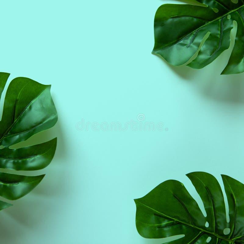 Kader van Monstera-bladeren op pastelkleur blauwe achtergrond met exemplaarruimte De Minimalismvlakte lag Voor levensstijlblog, b stock fotografie