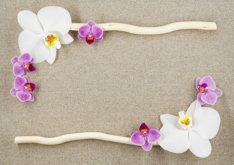 Kader van orchideeën en twee stokken op een beige stoffenachtergrond stock afbeeldingen