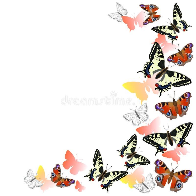 Kader van pauw vlinders en swallowtail het vliegen Rode, oranje en gele kleuren Ge?soleerdj op witte achtergrond Vector grafiek stock illustratie