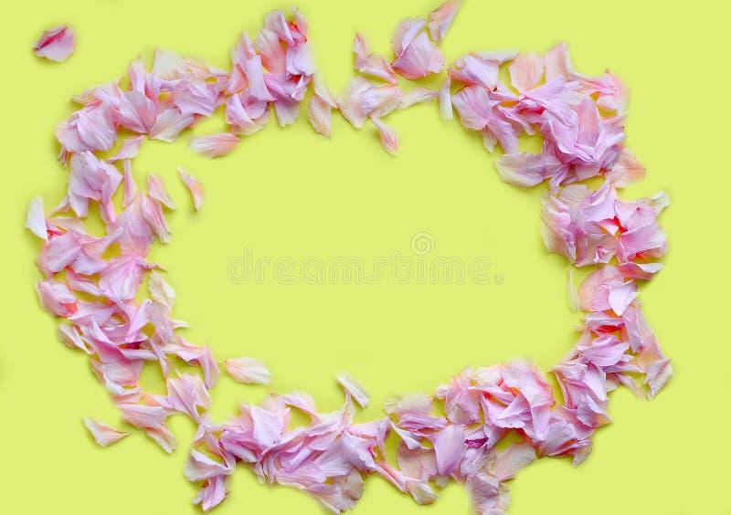 Kader van roze bloemblaadjes op een gele achtergrond Het concept de schoonheidsmiddelen van D, de lente Sluit omhoog Het Concept  royalty-vrije stock foto