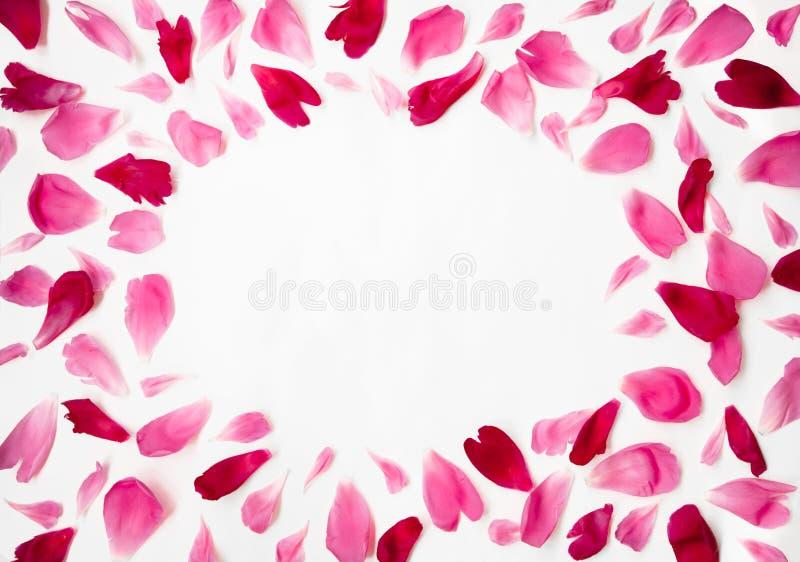 Kader van Roze en Rood de bloemblaadjes van pioenbloemen stock foto's