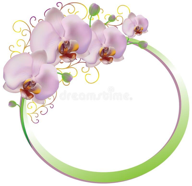 Kader van roze orchideeën royalty-vrije illustratie