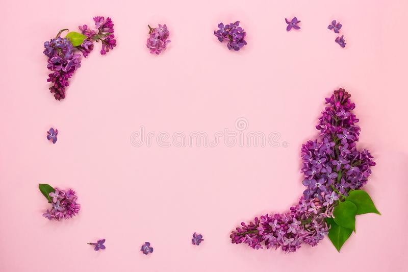 Kader van takken en bloemen van sering op een roze achtergrond Spatie voor kaarten voor de zomer, huwelijk, de dag van de moeder, royalty-vrije stock afbeelding
