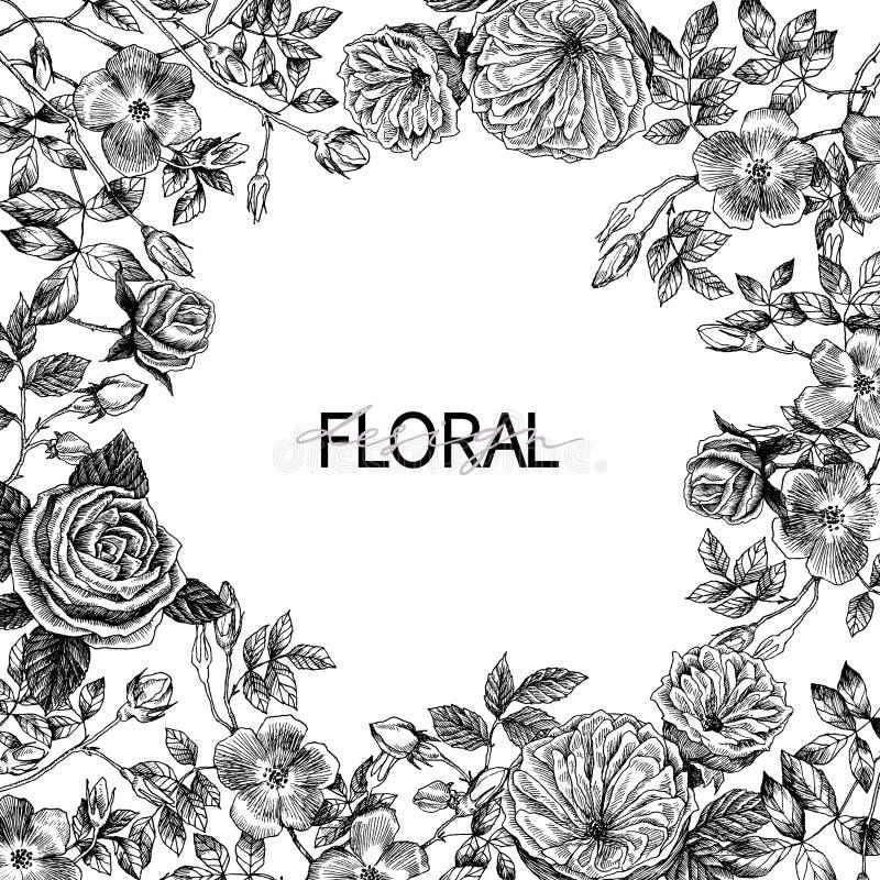 Kader van tuin het tedere Engelse rozen Uitstekende botanische hand getrokken illustratie De lentebloemen rond van plaats voor te royalty-vrije illustratie