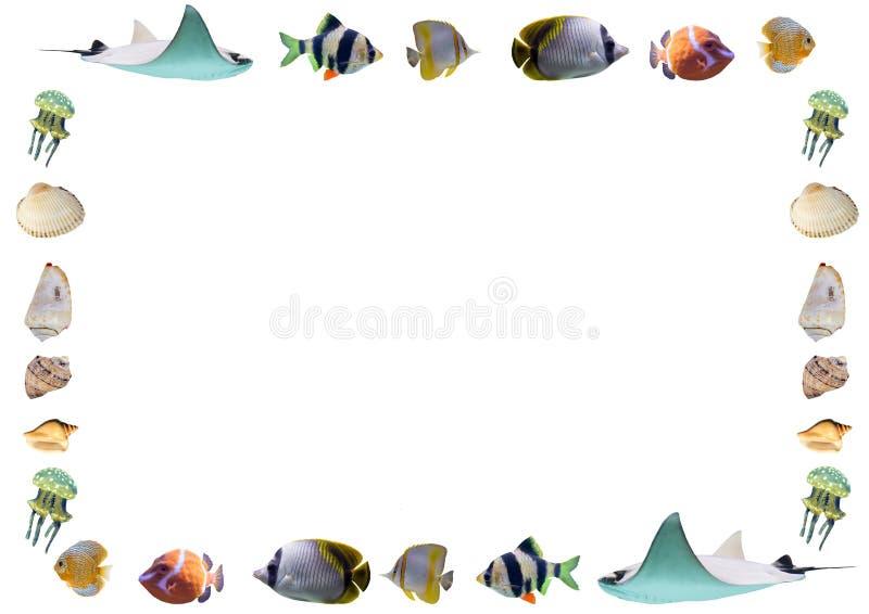 Kader van vissen en shells op witte achtergrond worden geïsoleerd die stock illustratie
