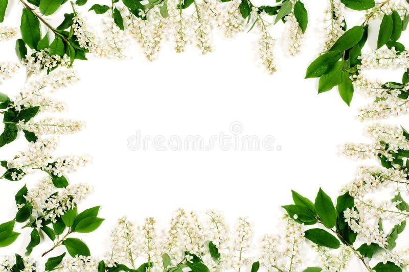 Kader van witte bloemen en groene die bladeren op het wit worden geïsoleerd De hoogste vlakke mening, legt stock fotografie