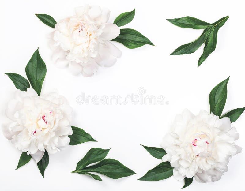 Kader van witte die pioenbloemen en bladeren op witte achtergrond worden geïsoleerd Vlak leg royalty-vrije stock fotografie