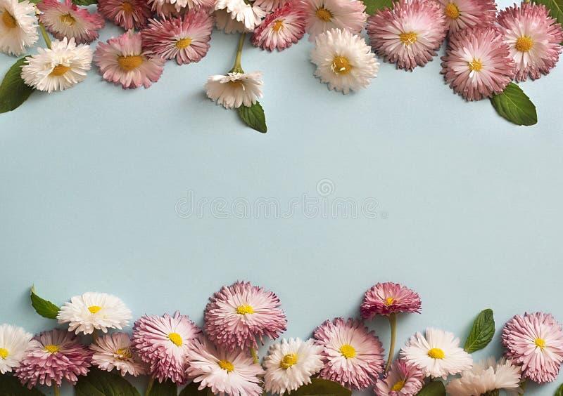 Kader van witte en roze madeliefjes stock afbeelding