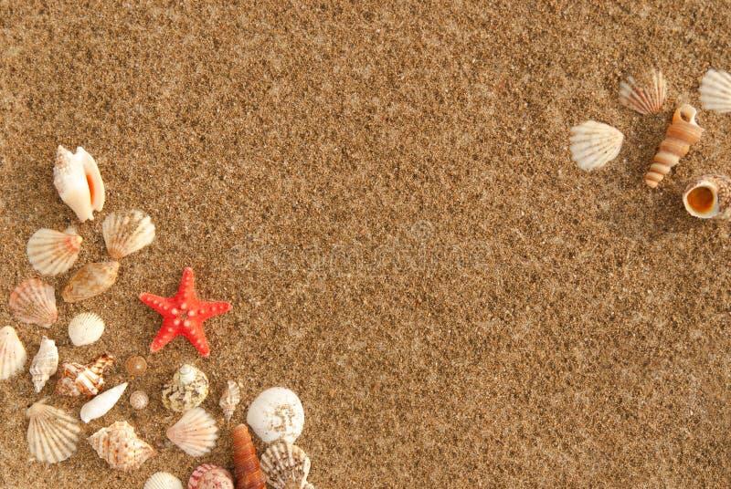 Kader van zeeschelpen met zand als achtergrond royalty-vrije stock afbeelding