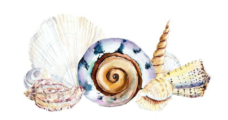 Kader van zeeschelpen Waterverfhand getrokken illustratie vector illustratie