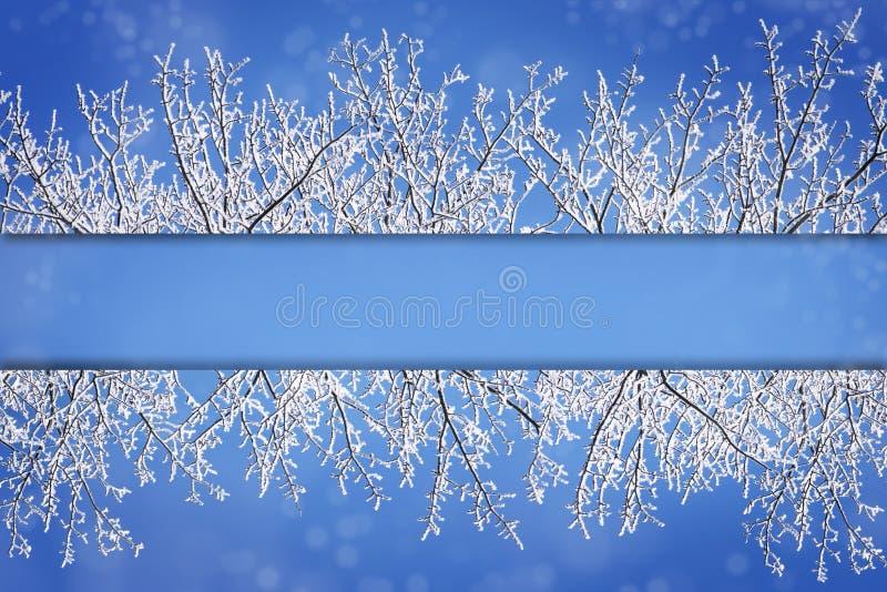Kadergrenzen van sneeuw behandelde takken tegen blauwe sneeuwb stock fotografie