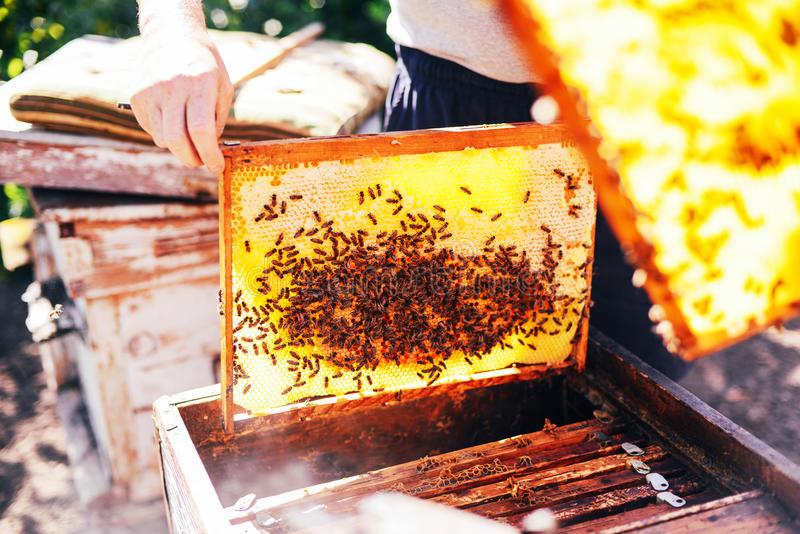 Kaders van een bijenbijenkorf Imker het oogsten honing De bijenroker stock fotografie