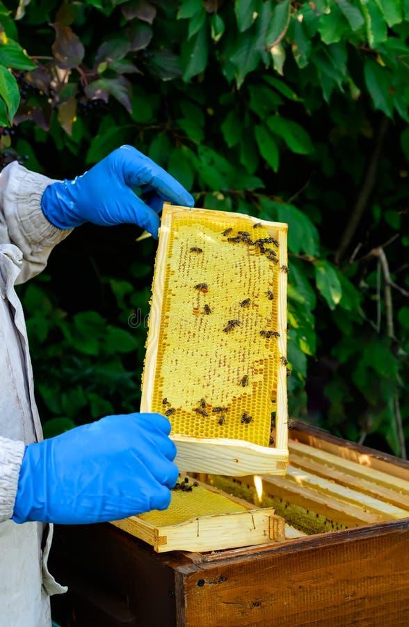 Kaders van een bijenbijenkorf Imker het oogsten honing Imker Inspecting Bee Hive royalty-vrije stock afbeelding