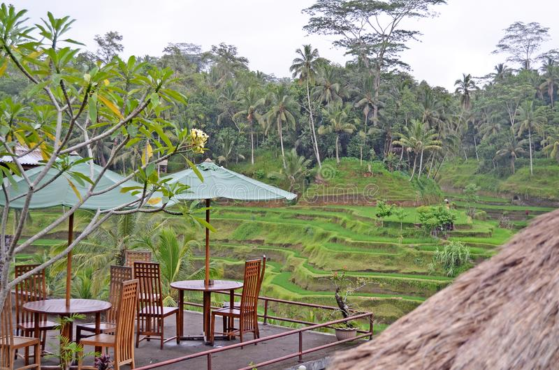 Kafé bland palmträd _ Indonesien arkivfoto