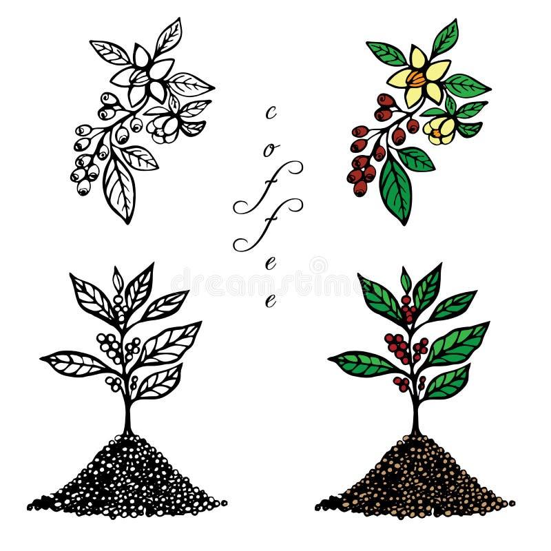 Kaffe 3 vektor illustrationer