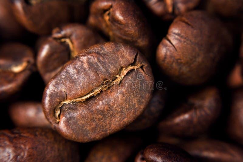kaffe kärnar ur arkivbild