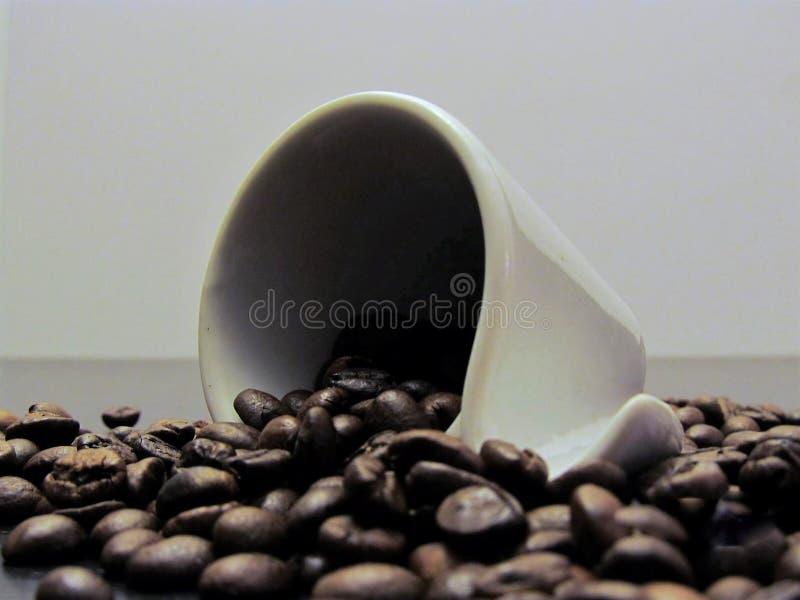 Kaffe kuper med kaffebönor royaltyfria bilder