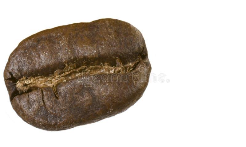 Kaffeböna arkivbilder