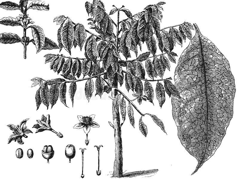 Kaffeböna på brun bakgrund stock illustrationer