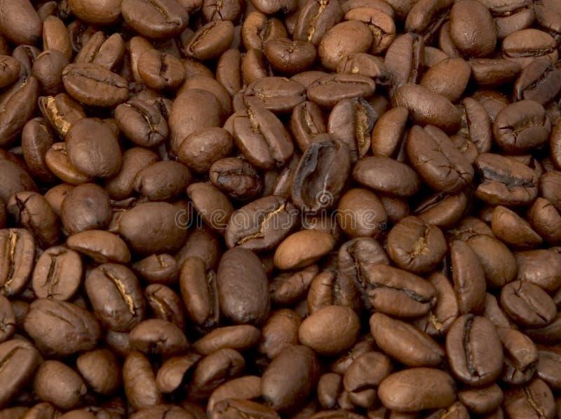 Download Kaffebönor fotografering för bildbyråer. Bild av starbucks - 284145