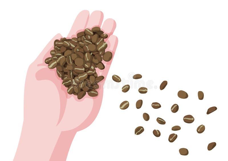 Kaffebönor i hand och nya bruna kaffebönor vektor illustrationer