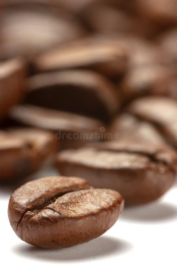 Kaffebönor i nära vy royaltyfri fotografi