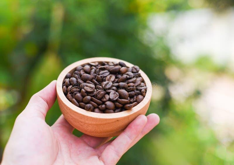 Kaffebönor i träbunkehand med naturgräsplanbakgrund arkivfoto
