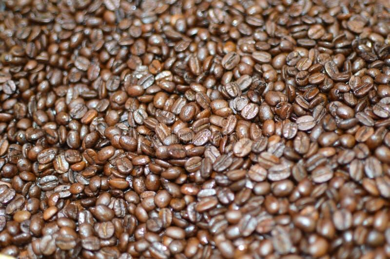 Kaffebönor, kaffekornbakgrund, stänger sig upp sikt arkivfoton