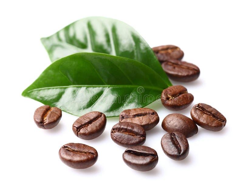 Kaffebönor med sidor royaltyfri bild