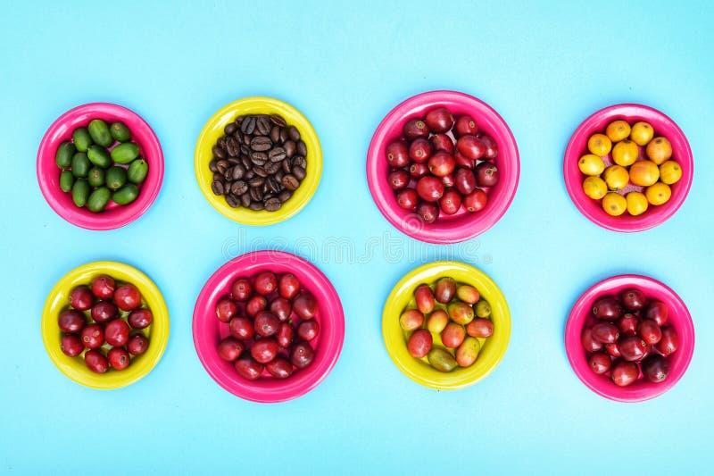 Kaffebönor och nya bärkaffebönor på plattan royaltyfria foton