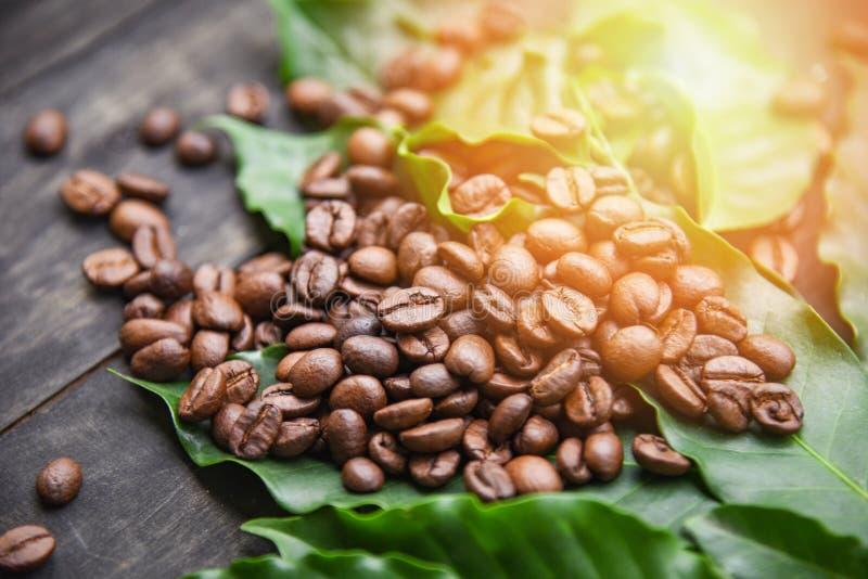 Kaffebönor på bladet/grillat kaffe på mörk trätabellbakgrund i morgonen arkivbilder