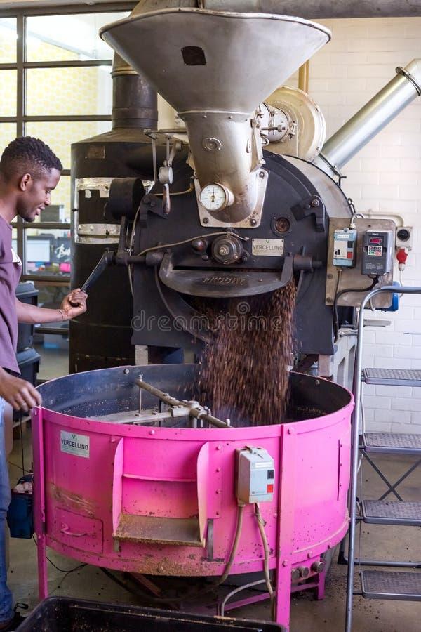 Kaffebönor som häller ut ur en stekhet vals royaltyfri bild