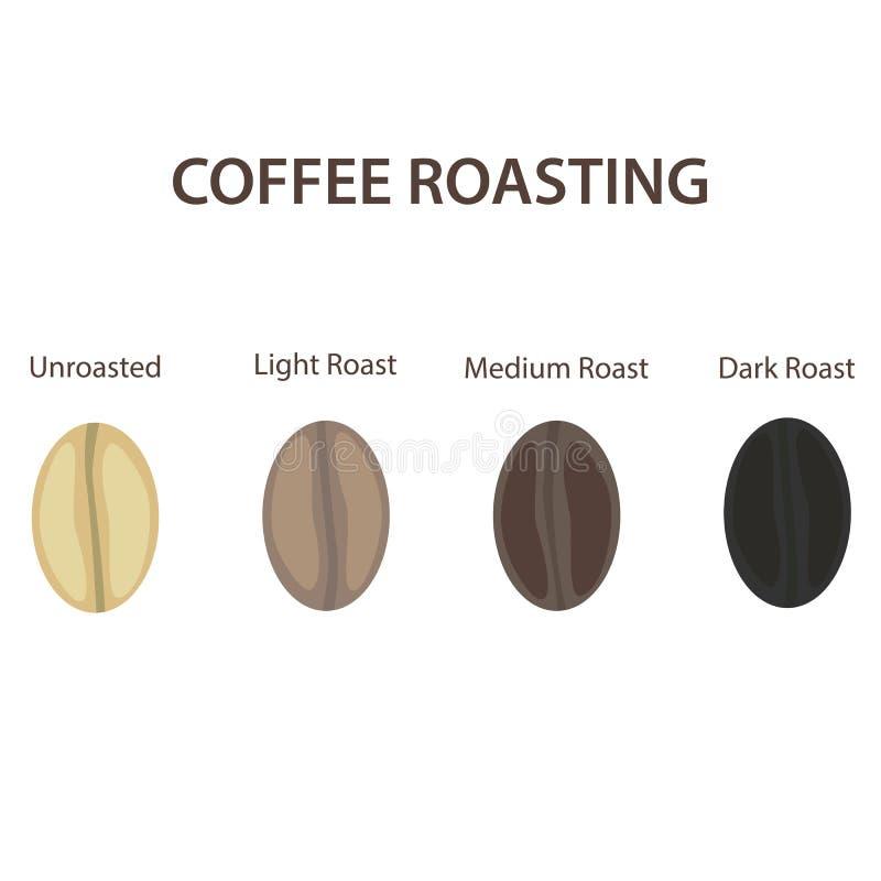 Kaffebönor ställde in uppvisning av olika etapper av att grilla som isolerades på den vita bakgrundsvektorillustrationen stock illustrationer