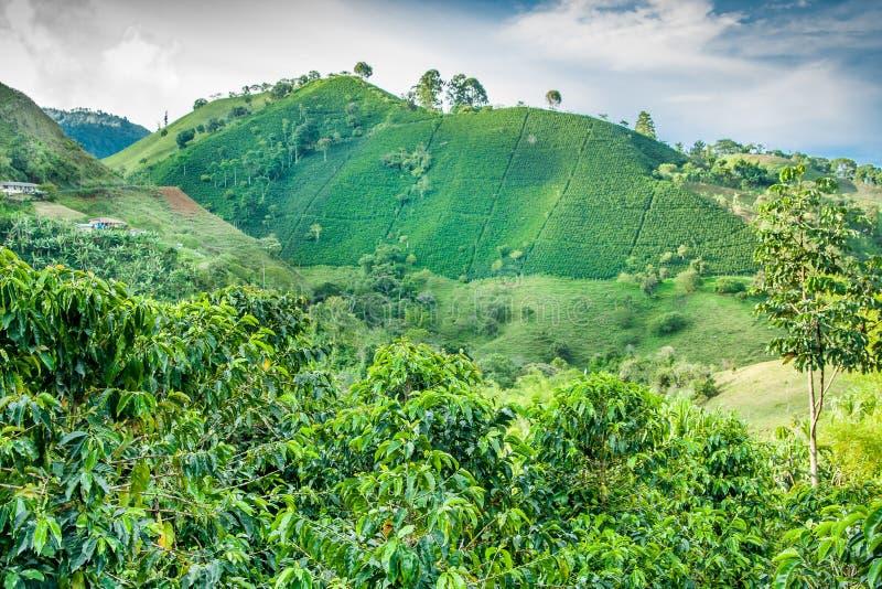 Kaffeberg Jerico, Colombia arkivfoto